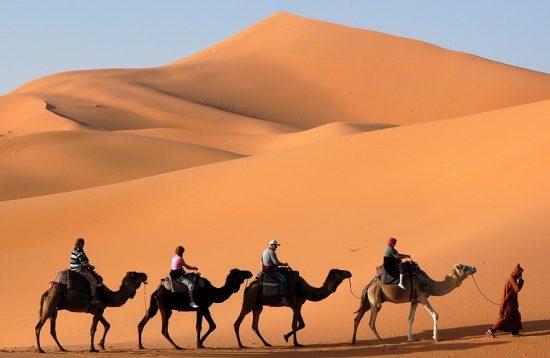 four-camels-in-desert